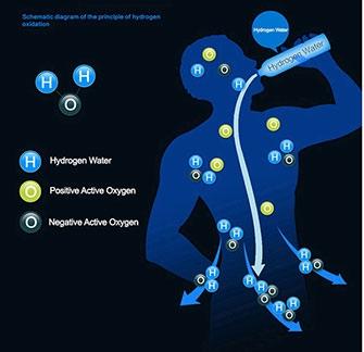 Vodíková voda v tele